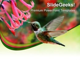 Humming Bird Animals PowerPoint Templates And PowerPoint Backgrounds 0211