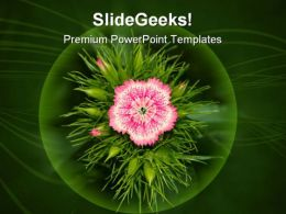 Inflorescence Of Phlox Beauty PowerPoint Templates And PowerPoint Backgrounds 0311