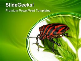 Insect Animals PowerPoint Templates And PowerPoint Backgrounds 0511