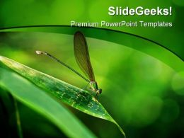 Insect Macro Laos01 Animals PowerPoint Templates And PowerPoint Backgrounds 0211
