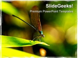 Insect Macro Laos Animals PowerPoint Templates And PowerPoint Backgrounds 0211