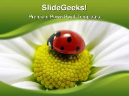 Lady Bug On Flower Animals PowerPoint Templates And PowerPoint Backgrounds 0211