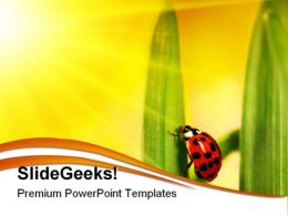 Lady Bug Struggling Nature PowerPoint Templates And PowerPoint Backgrounds 0211
