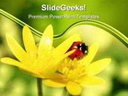Ladybird On Yellow Petals Nature PowerPoint Templates And PowerPoint Backgrounds 0211