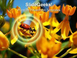 Ladybug Animal PowerPoint Template 1110