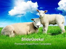 Lamb Animals PowerPoint Template 0910