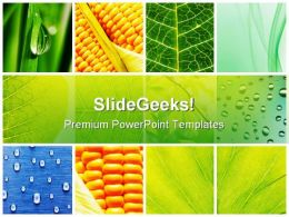 Leaves Collage Nature PowerPoint Templates And PowerPoint Backgrounds 0811