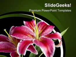 Lily Flowers Beauty PowerPoint Templates And PowerPoint Backgrounds 0311