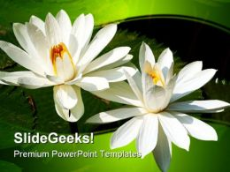 Lotus Flowers Beauty PowerPoint Template 1110