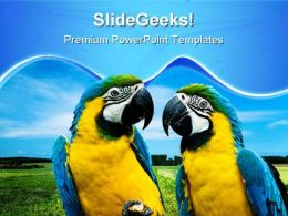 Love Parrots Beauty PowerPoint Templates And PowerPoint Backgrounds 0611