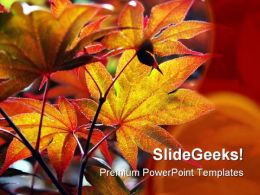 Maple Leaves Nature PowerPoint Template 0810