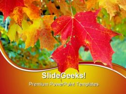 Maple Leaves Nature PowerPoint Templates And PowerPoint Backgrounds 0511