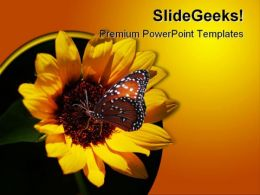Miniature Sunflower Beauty PowerPoint Templates And PowerPoint Backgrounds 0211