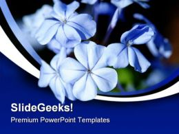 Moonlight Blue Flowers Beauty PowerPoint Templates And PowerPoint Backgrounds 0311