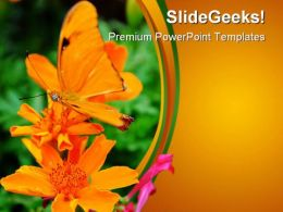 Orange Butterfly Nature PowerPoint Templates And PowerPoint Backgrounds 0211