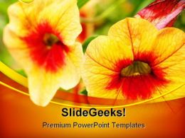 Orange Flowers Beauty PowerPoint Templates And PowerPoint Backgrounds 0211
