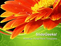 Orange Gerbera Daisy Flower Beauty PowerPoint Templates And PowerPoint Backgrounds 0611