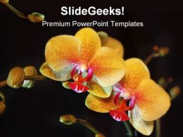 Orchid Flower Beauty PowerPoint Backgrounds And Templates 1210