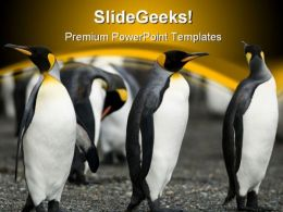 Penguin Animal PowerPoint Template 0810