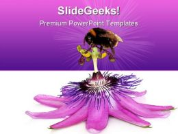 Pink Flower And Bumblebee Nature PowerPoint Templates And PowerPoint Backgrounds 0611