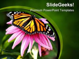 Pink Flower And Butterfly Animals PowerPoint Templates And PowerPoint Backgrounds 0111