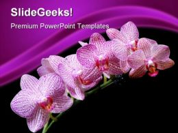 Pink Orchids Beauty PowerPoint Templates And PowerPoint Backgrounds 0311