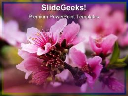 Pink Peach Blossom Nature PowerPoint Templates And PowerPoint Backgrounds 0311