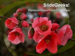 Pomegranate Flowers Beauty PowerPoint Templates And PowerPoint Backgrounds 0211