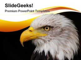 Portrait Of Eagle Animals PowerPoint Template 1110
