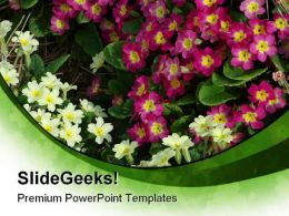 Primroses Beauty PowerPoint Templates And PowerPoint Backgrounds 0311