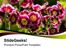 Primroses Flowers Nature PowerPoint Templates And PowerPoint Backgrounds 0311