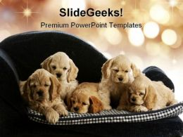 Puppies Animals PowerPoint Templates And PowerPoint Backgrounds 0111