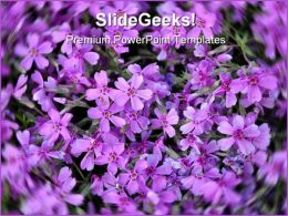 Purple Flowers Nature PowerPoint Templates And PowerPoint Backgrounds 0211