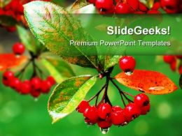 Red Berries Food PowerPoint Backgrounds And Templates 1210