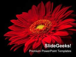 Red Flower Beauty PowerPoint Template 0810