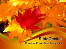 Red Maple Leaf Nature PowerPoint Templates And PowerPoint Backgrounds 0611