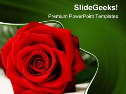 Red Rose Beauty PowerPoint Templates And PowerPoint Backgrounds 0211