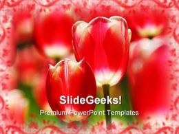 Red Tulips Beauty PowerPoint Templates And PowerPoint Backgrounds 0211
