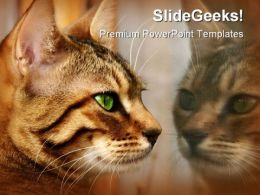 Reflections Animals PowerPoint Templates And PowerPoint Backgrounds 0211