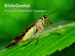 Scorpionfly Nature PowerPoint Templates And PowerPoint Backgrounds 0111