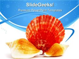 Seashell Beach Beauty PowerPoint Templates And PowerPoint Backgrounds 0611