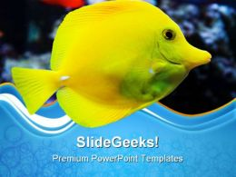 Seawater Butterflyfish Animals PowerPoint Templates And PowerPoint Backgrounds 0611