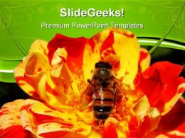 Singalong Patio Rose With Bee Nature PowerPoint Templates And PowerPoint Backgrounds 0611
