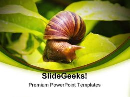 Snail Animals PowerPoint Templates And PowerPoint Backgrounds 0111