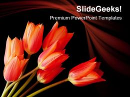 Spray Of Tulips Nature PowerPoint Templates And PowerPoint Backgrounds 0211