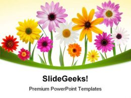 Summer Daisies Beauty PowerPoint Templates And PowerPoint Backgrounds 0311
