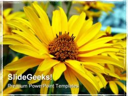 Sun Flower Beauty PowerPoint Templates And PowerPoint Backgrounds 0311
