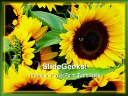Sunflower Beauty Abstract PowerPoint Templates And PowerPoint Backgrounds 0211