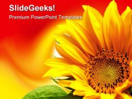 Sunflower Beauty PowerPoint Backgrounds And Templates 1210