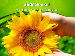 Sunflower In Female Hands Nature PowerPoint Templates And PowerPoint Backgrounds 0411